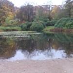 Pond at the playground